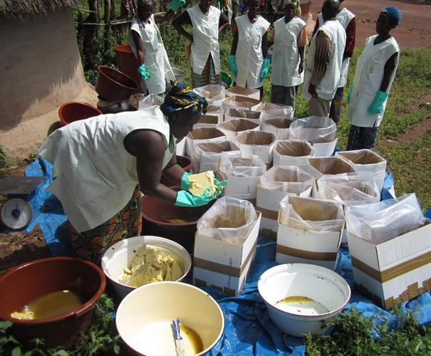 Remplissage des cartons avec le beurre de karité brut